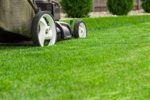 Manicuring the Lawn