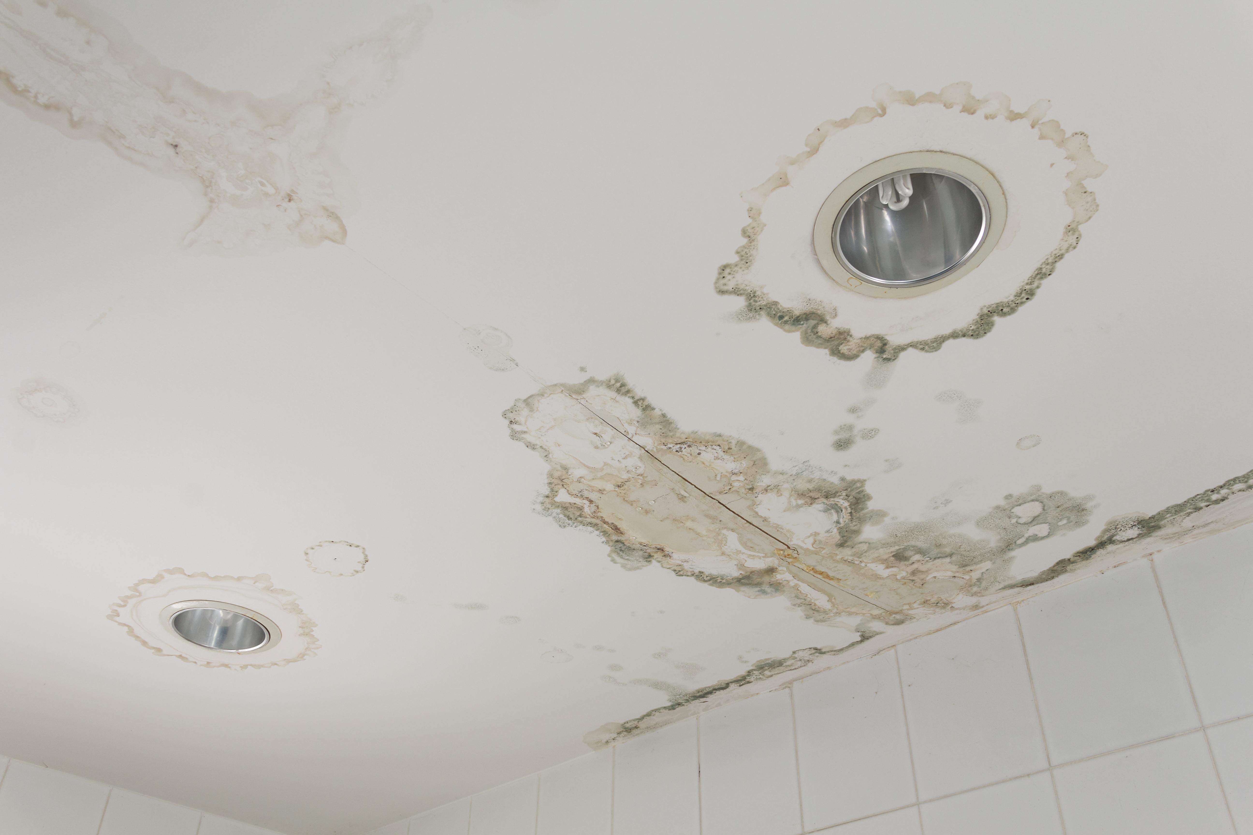 Home mold