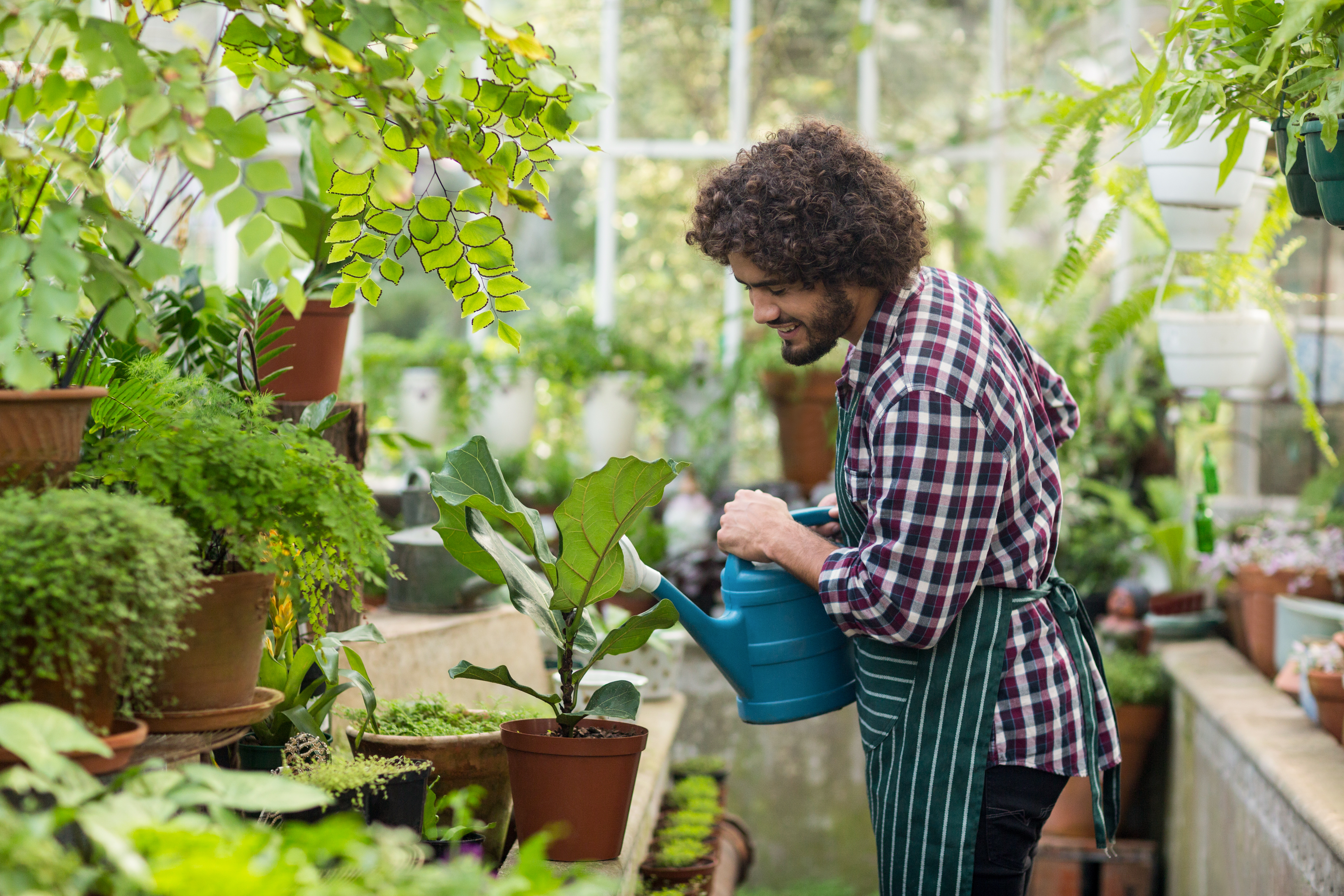 Man watering his plants in his greenhouse