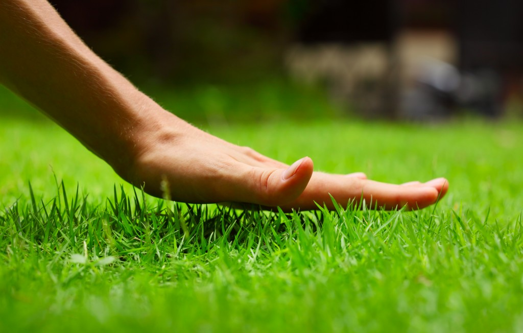 Hand above grass lawn