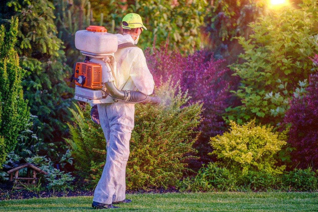 Man spraying on plants to avoid pests