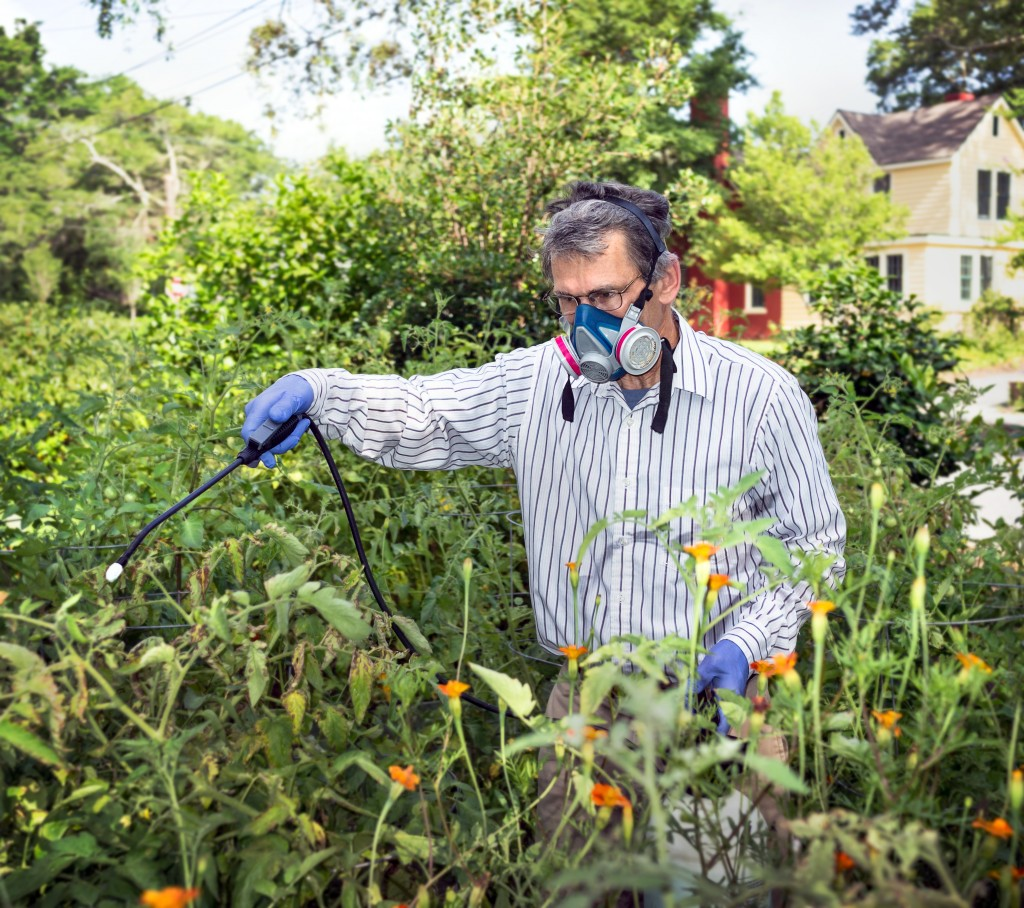 Man spraying on his plants to avoid pests