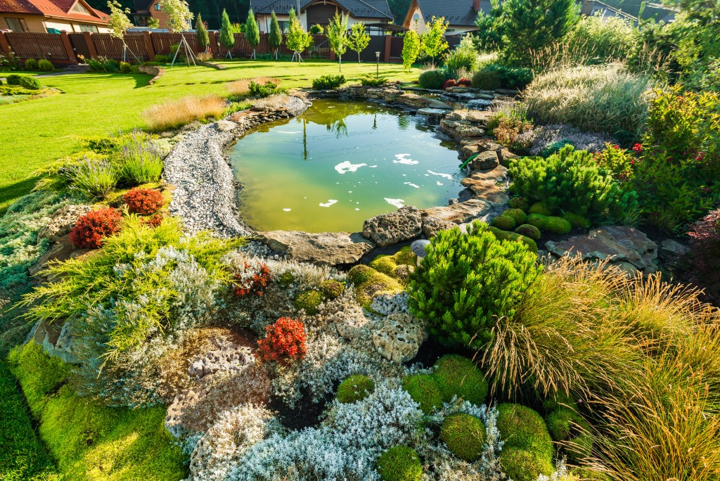Pond in backyard